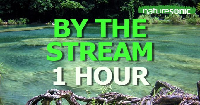 "Tranquil Rainforest Sound Ambience ""By The Stream"" in Guatemala"