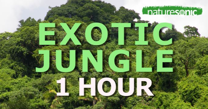 Exotic Deep Jungle Sound Ambience for Relaxation and Meditation (Mexico)