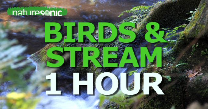 Birds by the Stream – Japanese Forest – 1 Hour Recording with No Music
